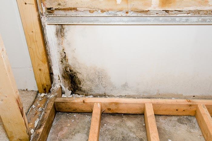 Mold Remediation & Prevention | Stuart, FL | Coastal DKI